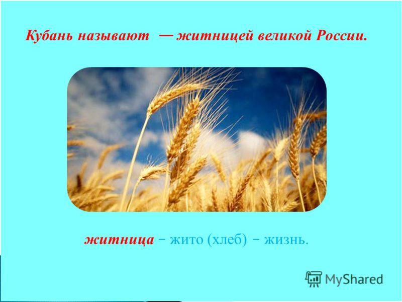 Кубань называют житницей великой России. житница – жито (хлеб) – жизнь.