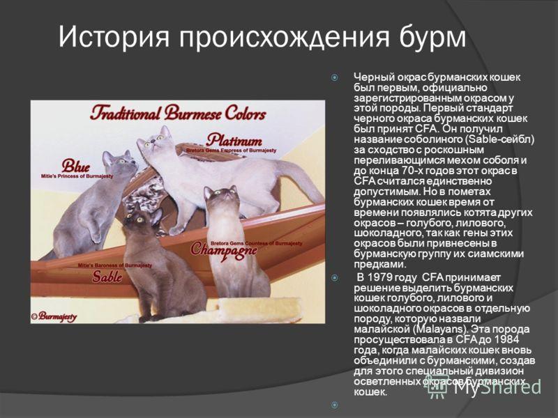 История происхождения бурм Черный окрас бурманских кошек был первым, официально зарегистрированным окрасом у этой породы. Первый стандарт черного окраса бурманских кошек был принят CFA. Он получил название соболиного (Sable-сейбл) за сходство с роско