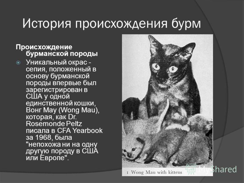 История происхождения бурм Происхождение бурманской породы Уникальный окрас - сепия, положенный в основу бурманской породы впервые был зарегистрирован в США у одной единственной кошки, Вонг Мау (Wong Mau), которая, как Dr. Rosemonde Peltz писала в CF
