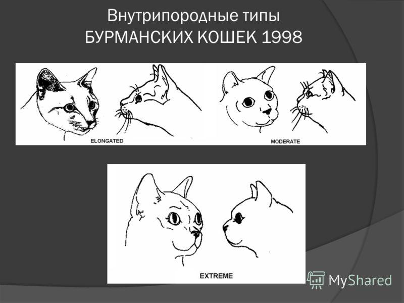 Внутрипородные типы БУРМАНСКИХ КОШЕК 1998