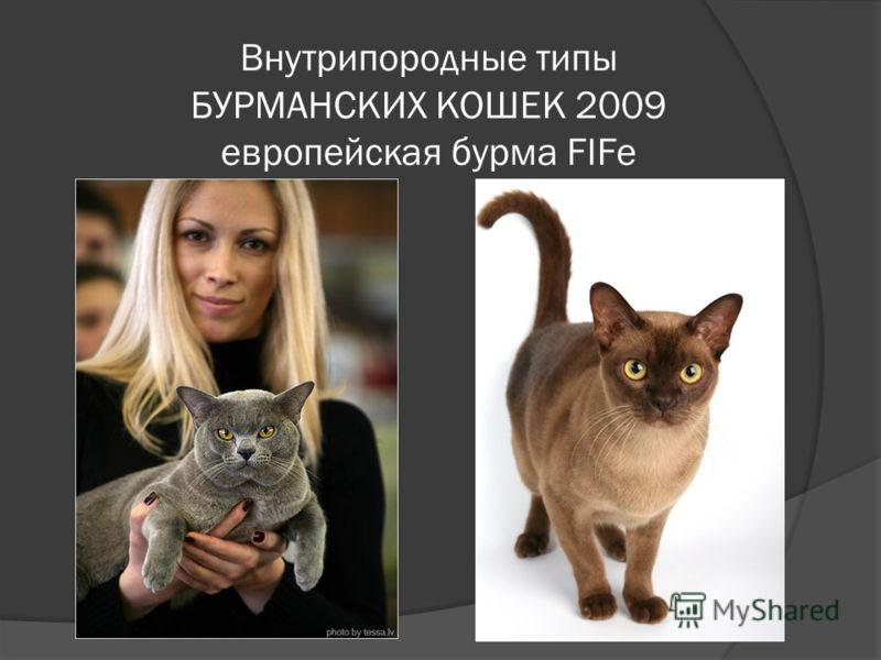 Внутрипородные типы БУРМАНСКИХ КОШЕК 2009 европейская бурма FIFe