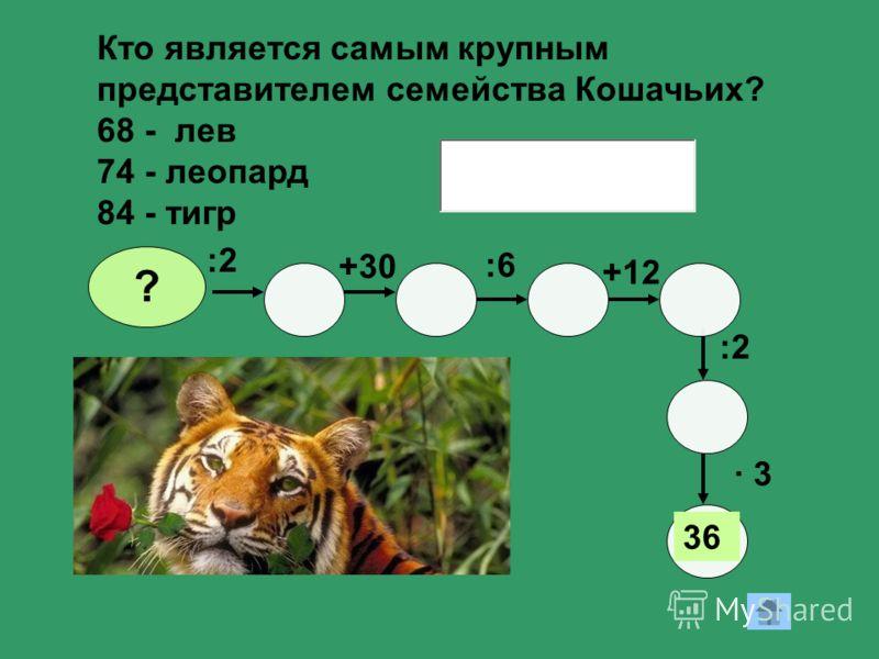+30 +12 :2 · 3· 3 36 ? :6 Кто является самым крупным представителем семейства Кошачьих? 68 - лев 74 - леопард 84 - тигр