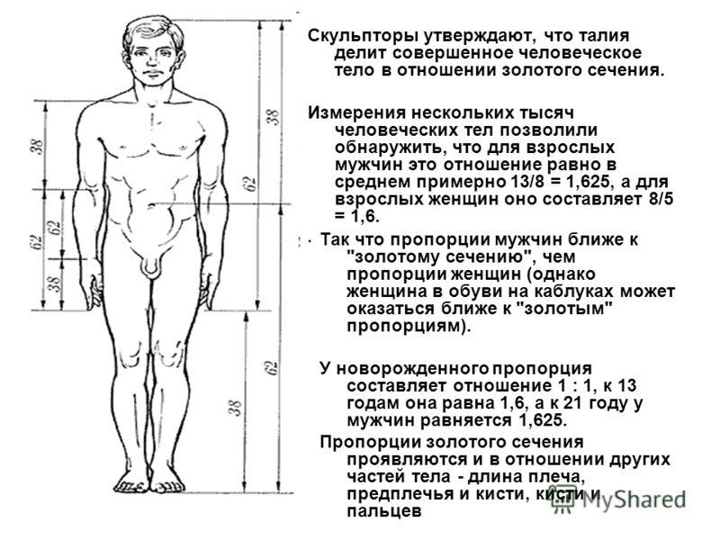 Скульпторы утверждают, что талия делит совершенное человеческое тело в отношении золотого сечения. Измерения нескольких тысяч человеческих тел позволили обнаружить, что для взрослых мужчин это отношение равно в среднем примерно 13/8 = 1,625, а для вз