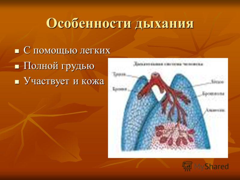 Особенности дыхания С помощью легких С помощью легких Полной грудью Полной грудью Участвует и кожа Участвует и кожа
