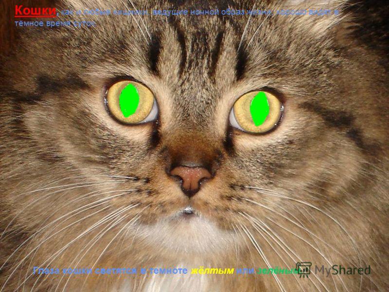 рефлекторное приспособление глаза к изменению яркости. рефлекторное приспособление глаза к изменению яркости.