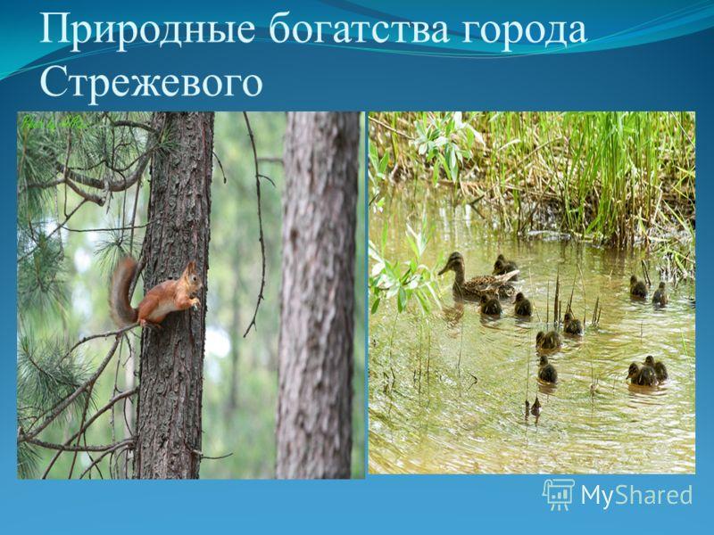 Природные богатства города Стрежевого