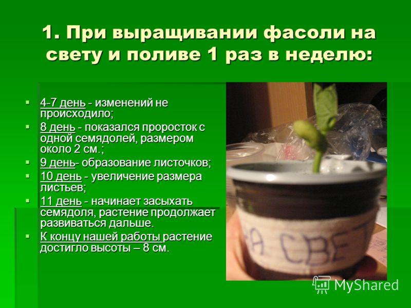Как сделать кальян из чая