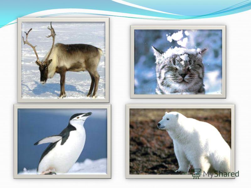Описание Какая картинка лишняя? Почему? Ребёнок должен назвать животных изображённых на картинках. На клик мышки при правильном ответе высвечивается слово «Молодец!» Если картинка выбрана неправильно, появится соответствующая надпись. Обсудите все ка