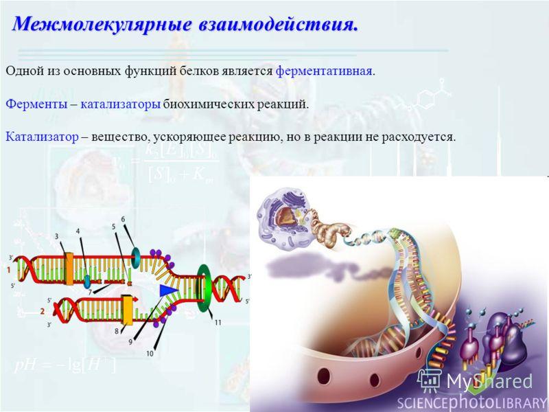 Одной из основных функций белков является ферментативная. Ферменты – катализаторы биохимических реакций. Катализатор – вещество, ускоряющее реакцию, но в реакции не расходуется. Межмолекулярные взаимодействия.