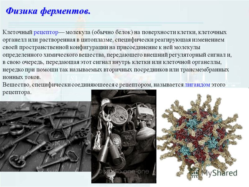 Клеточный рецептор молекула (обычно белок) на поверхности клетки, клеточных органелл или растворенная в цитоплазме, специфически реагирующая изменением своей пространственной конфигурации на присоединение к ней молекулы определенного химического веще