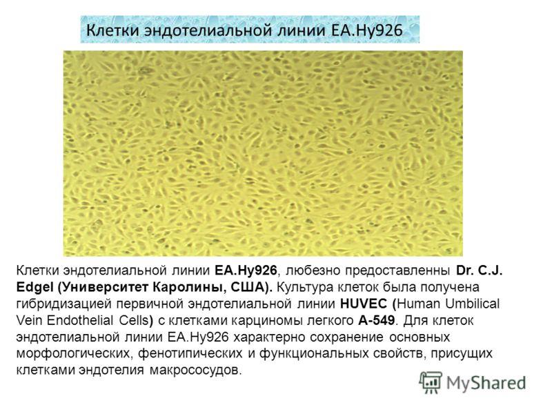 Клетки эндотелиальной линии EA.Hy926 Клетки эндотелиальной линии EA.Hy926, любезно предоставленны Dr. C.J. Edgel (Университет Каролины, США). Культура клеток была получена гибридизацией первичной эндотелиальной линии HUVEC (Human Umbilical Vein Endot