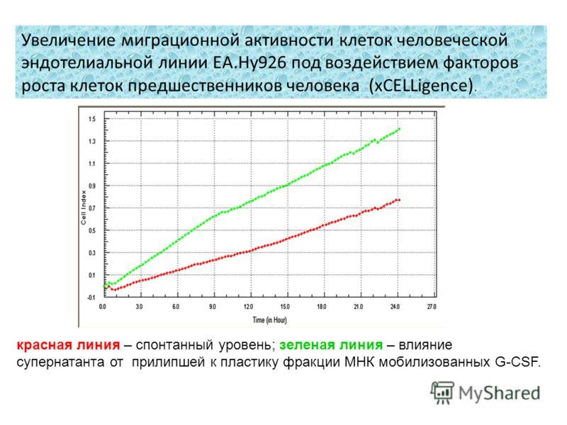 Увеличение миграционной активности клеток человеческой эндотелиальной линии EA.Hy926 под воздействием факторов роста клеток предшественников человека (xCELLigence). красная линия – спонтанный уровень; зеленая линия – влияние супернатанта от прилипшей