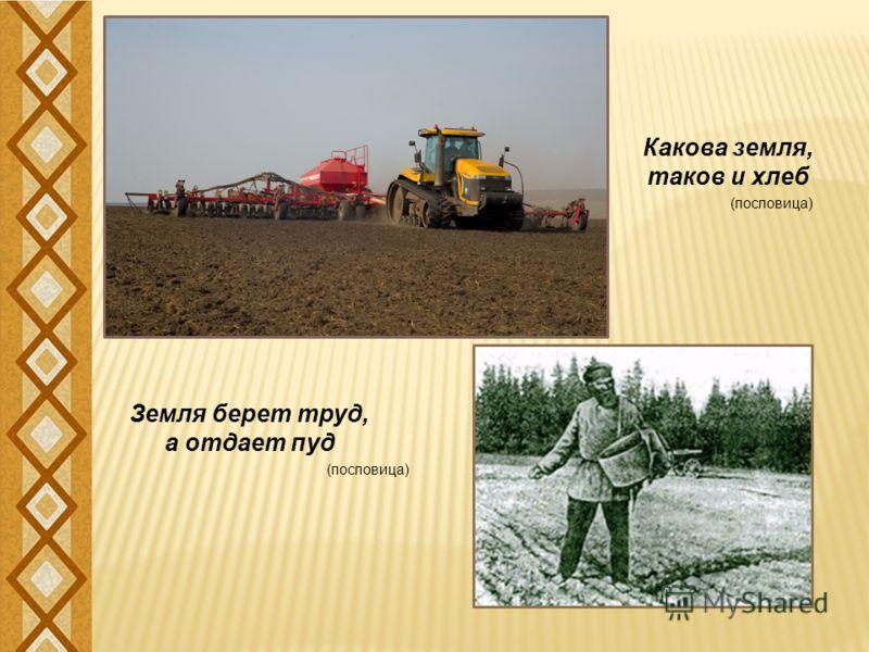 Земля берет труд, а отдает пуд Какова земля, таков и хлеб (пословица)