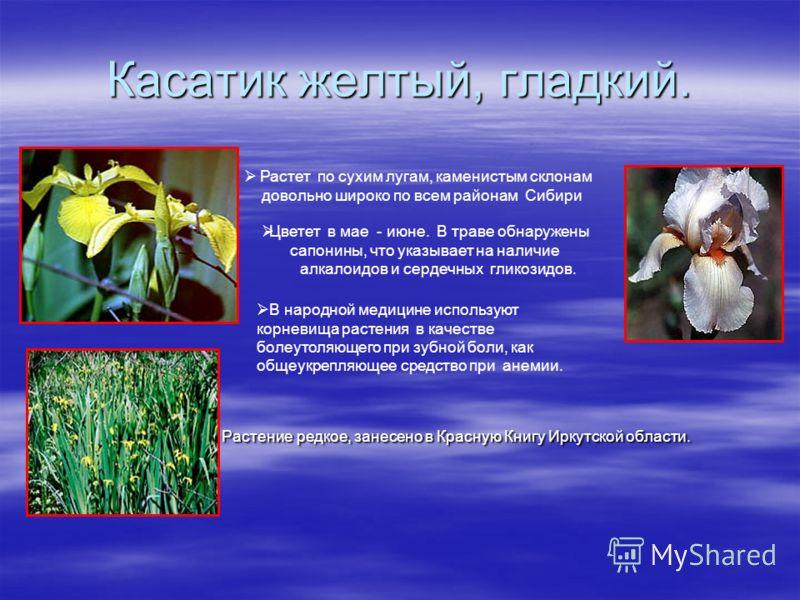 Касатик желтый, гладкий. Растение редкое, занесено в Красную Книгу Иркутской области. Растение редкое, занесено в Красную Книгу Иркутской области. Растет по сухим лугам, каменистым склонам довольно широко по всем районам Сибири Цветет в мае - июне. В