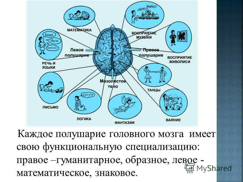 Каждое полушарие головного мозга имеет свою функциональную специализацию: правое –гуманитарное, образное, левое - математическое, знаковое.