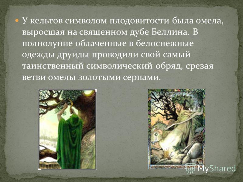 У кельтов символом плодовитости была омела, выросшая на священном дубе Беллина. В полнолуние облаченные в белоснежные одежды друиды проводили свой самый таинственный символический обряд, срезая ветви омелы золотыми серпами.