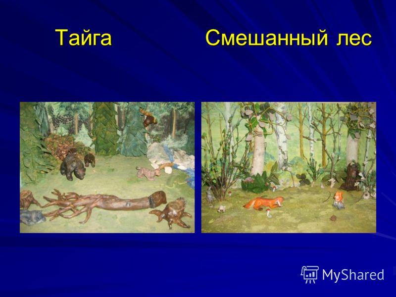 Тайга Смешанный лес Тайга Смешанный лес