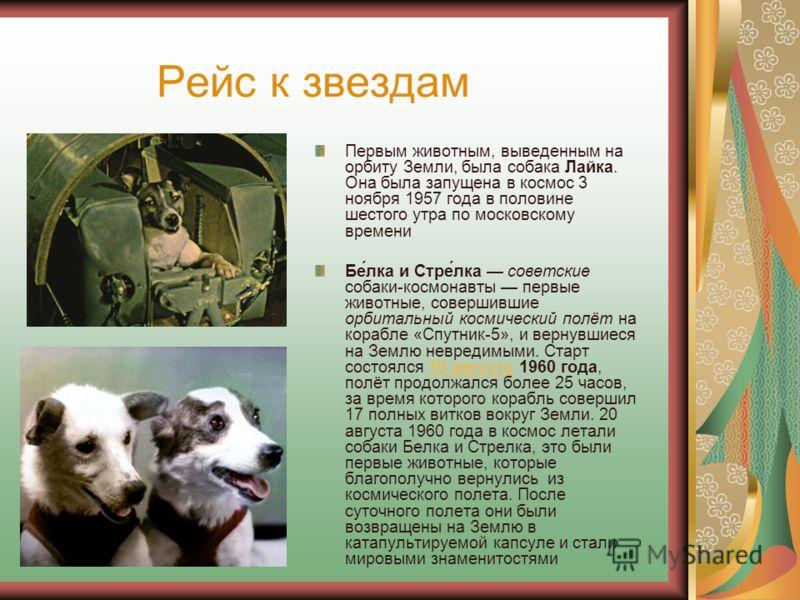 Рейс к звездам Первым животным, выведенным на орбиту Земли, была собака Лайка. Она была запущена в космос 3 ноября 1957 года в половине шестого утра по московскому времени Бе́лка и Стре́лка советские собаки-космонавты первые животные, совершившие орб