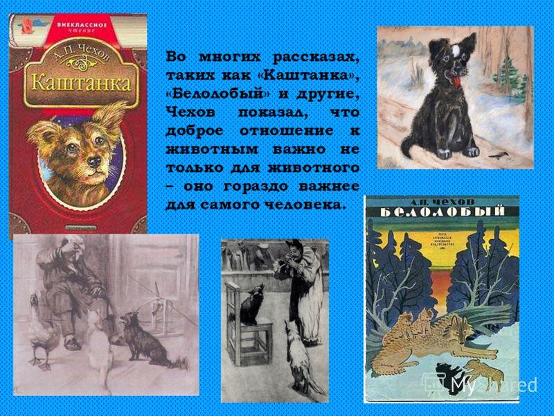 Во многих рассказах, таких как «Каштанка», «Белолобый» и другие, Чехов показал, что доброе отношение к животным важно не только для животного – оно гораздо важнее для самого человека.