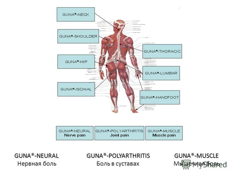 GUNA®-NEURAL GUNA®-POLYARTHRITIS GUNA®-MUSCLE Нервная боль Боль в суставах Мышечная боль