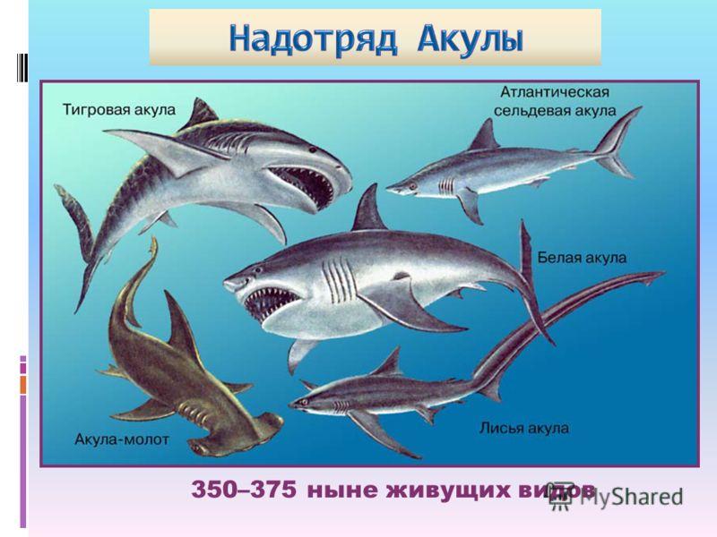 350–375 ныне живущих видов