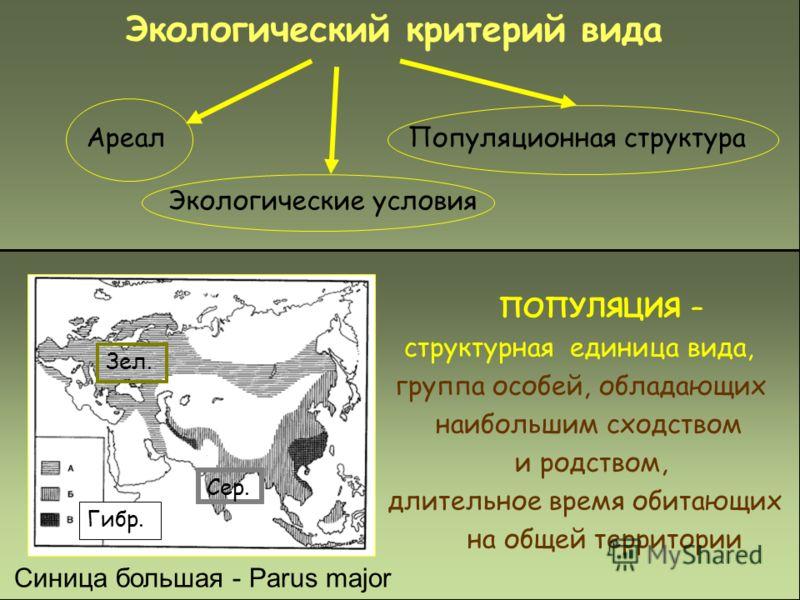 Экологический критерий вида Экологические условия АреалПопуляционная структура ПОПУЛЯЦИЯ – структурная единица вида, группа особей, обладающих наибольшим сходством и родством, длительное время обитающих на общей территории Синица большая - Parus majo