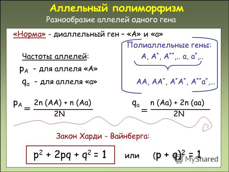 Аллельный полиморфизм Разнообразие аллелей одного гена «Норма» - диаллельный ген – «А» и «а» Полиаллельные гены: Частоты аллелей: А, А *, А **,.. а, а *,.. p A - для аллеля «A» q a - для аллеля «а» АА, АА *, А * А *, А ** а *,… p A 2n (AA) + n (Aa) q