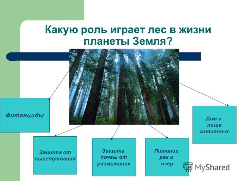 Какую роль играет лес в жизни планеты Земля? Фитонциды Защита от выветривания Защита почвы от размывания Питание рек и озер Дом и пища животных