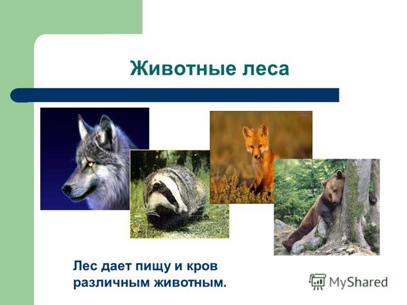 Животные леса Лес дает пищу и кров различным животным.
