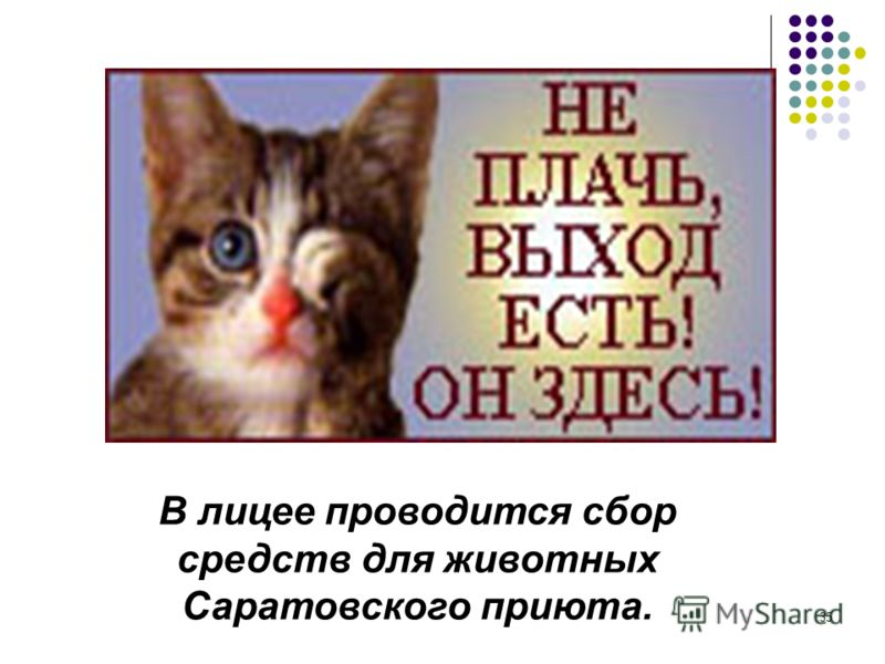35 В лицее проводится сбор средств для животных Саратовского приюта.