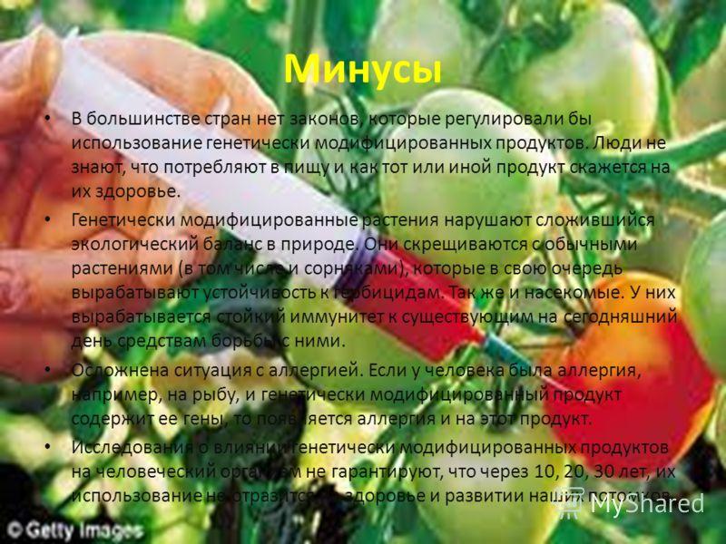 Минусы В большинстве стран нет законов, которые регулировали бы использование генетически модифицированных продуктов. Люди не знают, что потребляют в пищу и как тот или иной продукт скажется на их здоровье. Генетически модифицированные растения наруш
