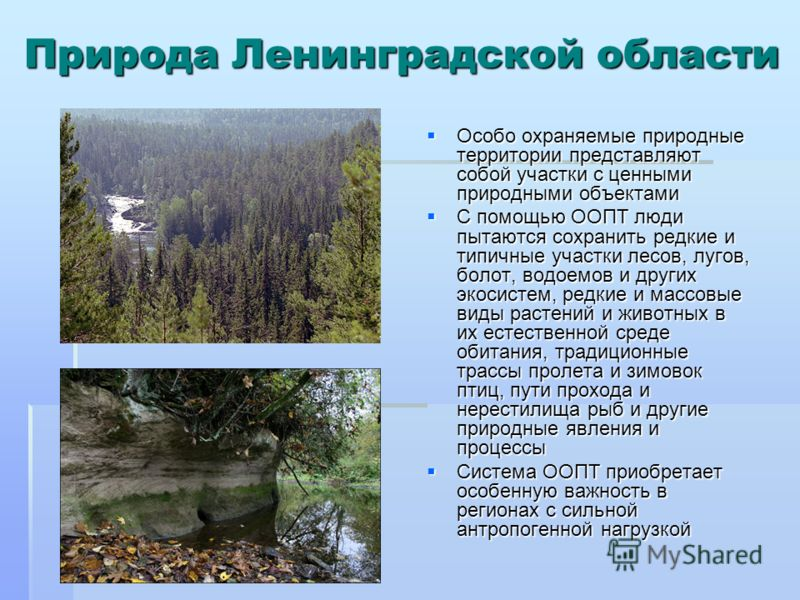 Природа Ленинградской области Особо охраняемые природные территории представляют собой участки с ценными природными объектами Особо охраняемые природные территории представляют собой участки с ценными природными объектами С помощью ООПТ люди пытаются
