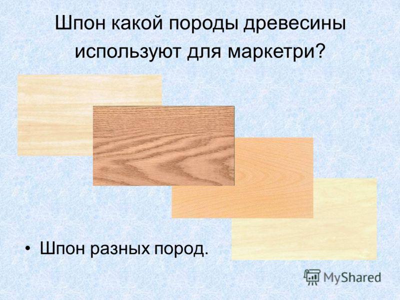 Шпон какой породы древесины используют для маркетри? Шпон разных пород.