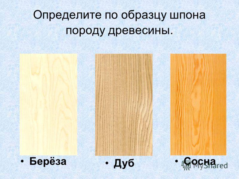 Определите по образцу шпона породу древесины. Берёза Дуб Сосна