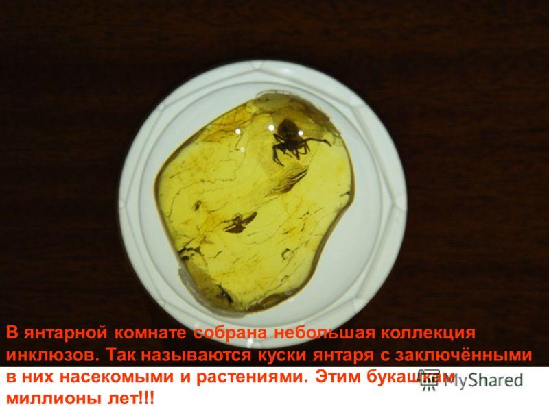 В янтарной комнате собрана небольшая коллекция инклюзов. Так называются куски янтаря с заключёнными в них насекомыми и растениями. Этим букашкам миллионы лет!!!