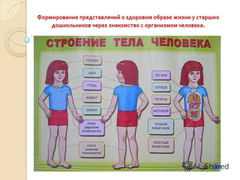 знакомство дошкольников с телом человека