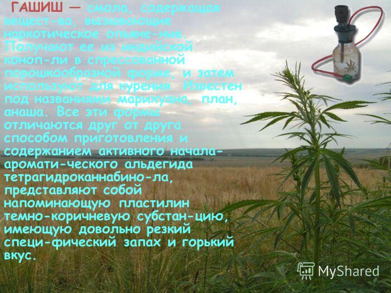 МАРИХУАНА, конопля, травка, план, наркотики, гашиш, косяк ...