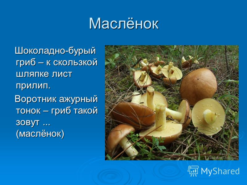 Маслёнок Шоколадно-бурый гриб – к скользкой шляпке лист прилип. Шоколадно-бурый гриб – к скользкой шляпке лист прилип. Воротник ажурный тонок – гриб такой зовут... (маслёнок) Воротник ажурный тонок – гриб такой зовут... (маслёнок)