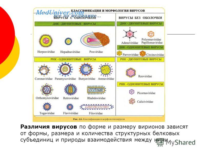 Различия вирусов по форме и размеру вирионов зависят от формы, размера и количества структурных белковых субъединиц и природы взаимодействия между ними.