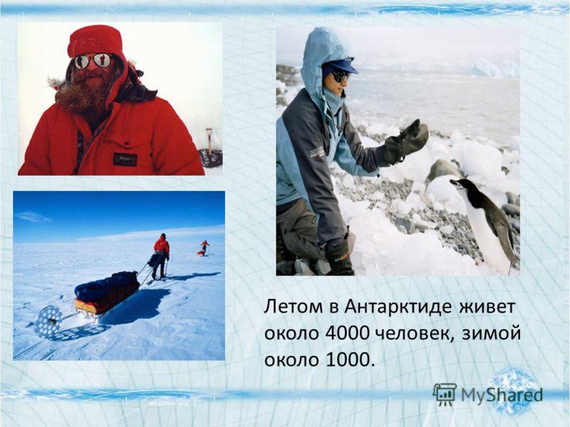 Летом в Антарктиде живет около 4000 человек, зимой около 1000.