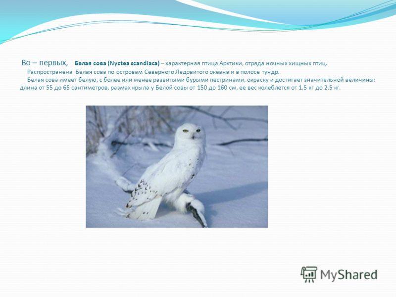 Во – первых, Белая сова (Nyctea scandiaca) – характерная птица Арктики, отряда ночных хищных птиц. Распространена Белая сова по островам Северного Ледовитого океана и в полосе тундр. Белая сова имеет белую, с более или менее развитыми бурыми пестрина