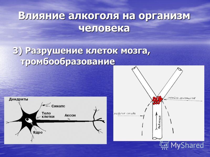 3) Разрушение клеток мозга, тромбообразование Влияние алкоголя на организм человека