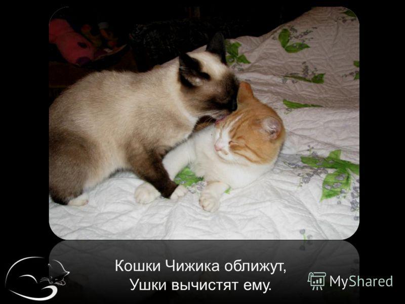 Кошки Чижика оближут, Ушки вычистят ему.