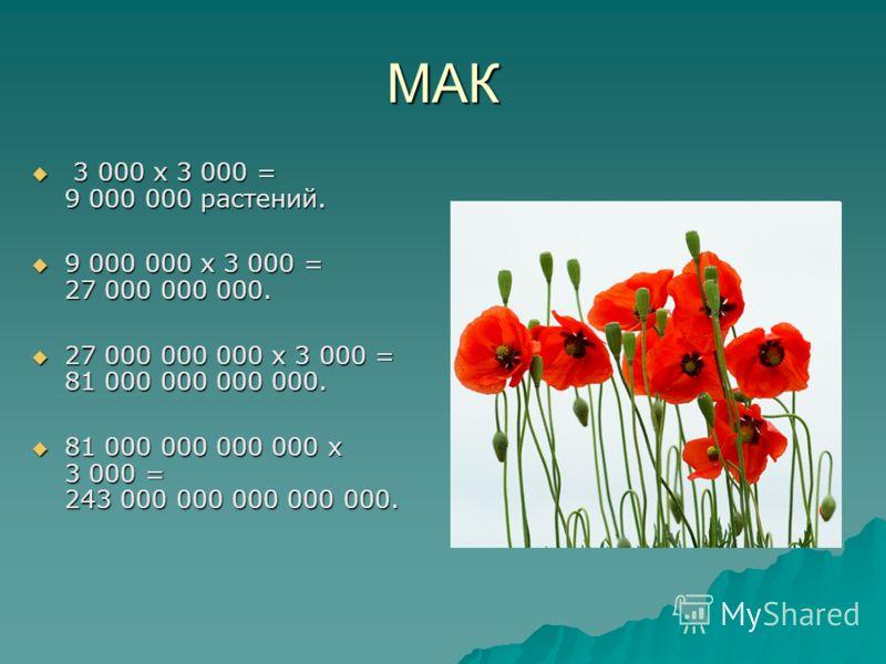 МАК 3 000 х 3 000 = 9 000 000 растений. 3 000 х 3 000 = 9 000 000 растений. 9 000 000 х 3 000 = 27 000 000 000. 9 000 000 х 3 000 = 27 000 000 000. 27 000 000 000 х 3 000 = 81 000 000 000 000. 27 000 000 000 х 3 000 = 81 000 000 000 000. 81 000 000 0