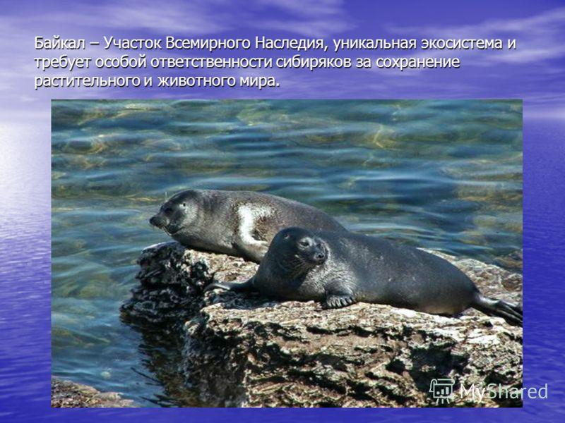 Байкал – Участок Всемирного Наследия, уникальная экосистема и требует особой ответственности сибиряков за сохранение растительного и животного мира.