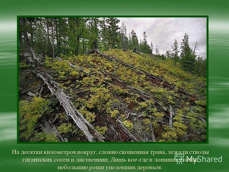 На десятки километров вокруг, словно скошенная трава, лежали стволы гигантских сосен и лиственниц. Лишь кое-где в лощинах стояли небольшие рощи уцелевших деревьев.