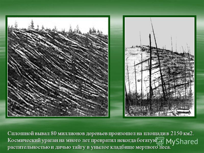 Сплошной вывал 80 миллионов деревьев произошел на площади в 2150 км2. Космический ураган на много лет превратил некогда богатую растительностью и дичью тайгу в унылое кладбище мертвого леса.