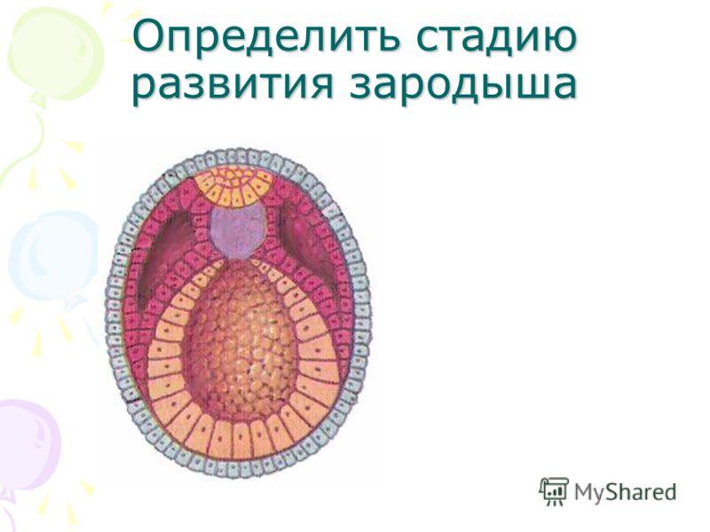 Эмбриональный Период Развития Презентация