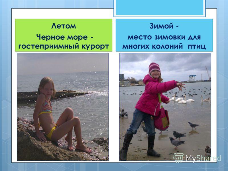 Летом Черное море - гостеприимный курорт Зимой - место зимовки для многих колоний птиц