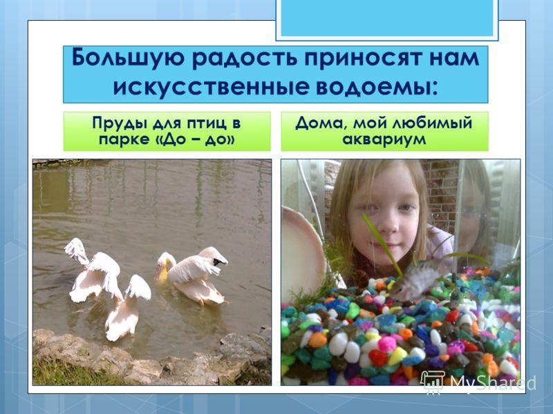 Большую радость приносят нам искусственные водоемы: Пруды для птиц в парке «До – до» Дома, мой любимый аквариум